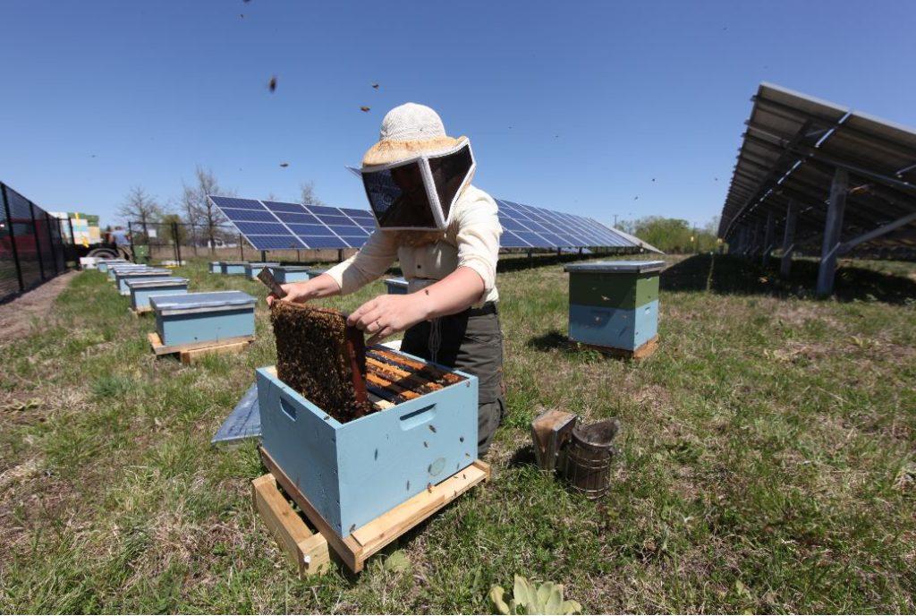 Local Honey Beekeeper at Hive
