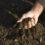 Healthy Soil In 5 Easy Steps