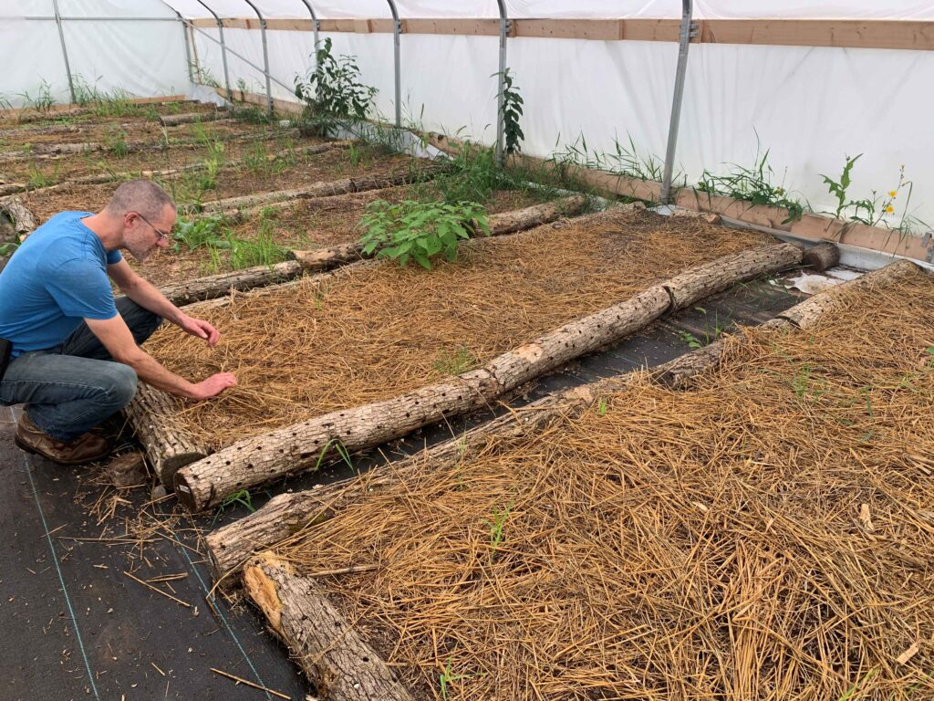Jeremy Kneels Over a Bed of Compost and Straw Where Nameko Mushrooms Are Grown