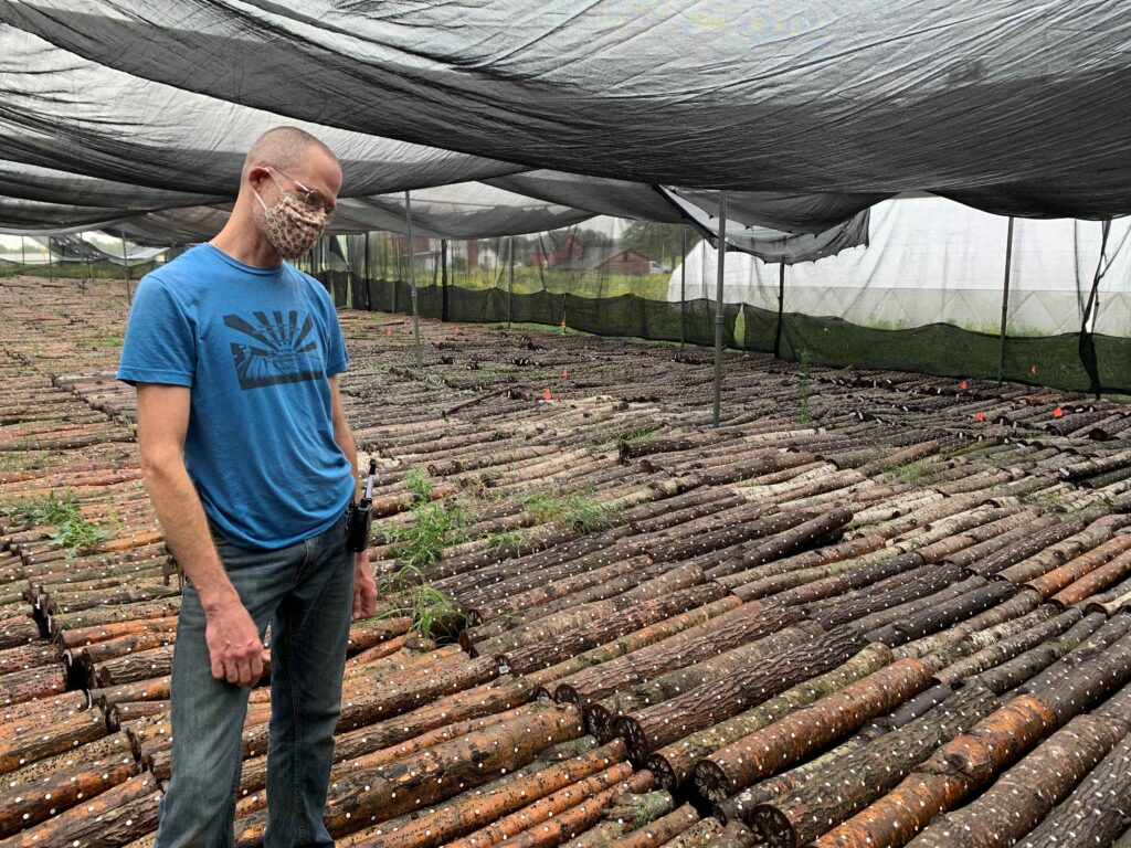 Jeremy Stands in a Tent Full of Logs Ready to Grow Mushrooms