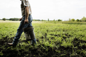 One of Lakewinds' Farmer-Partners Walks Through His Field