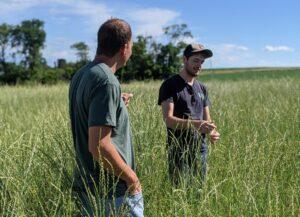 Kernza farmers survey a field