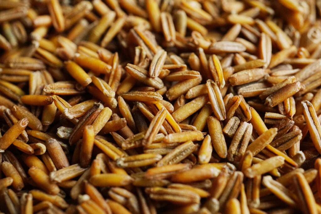 Image for Kernza: A Local Grain with a Big Future
