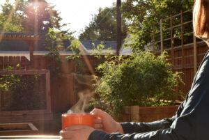 Tea in the Morning Sun